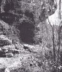 Musil.Stadtwald.Höhlen.Corinobuch